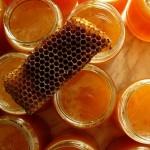 Лечение гайморита пчелиным лекарством — прополисом